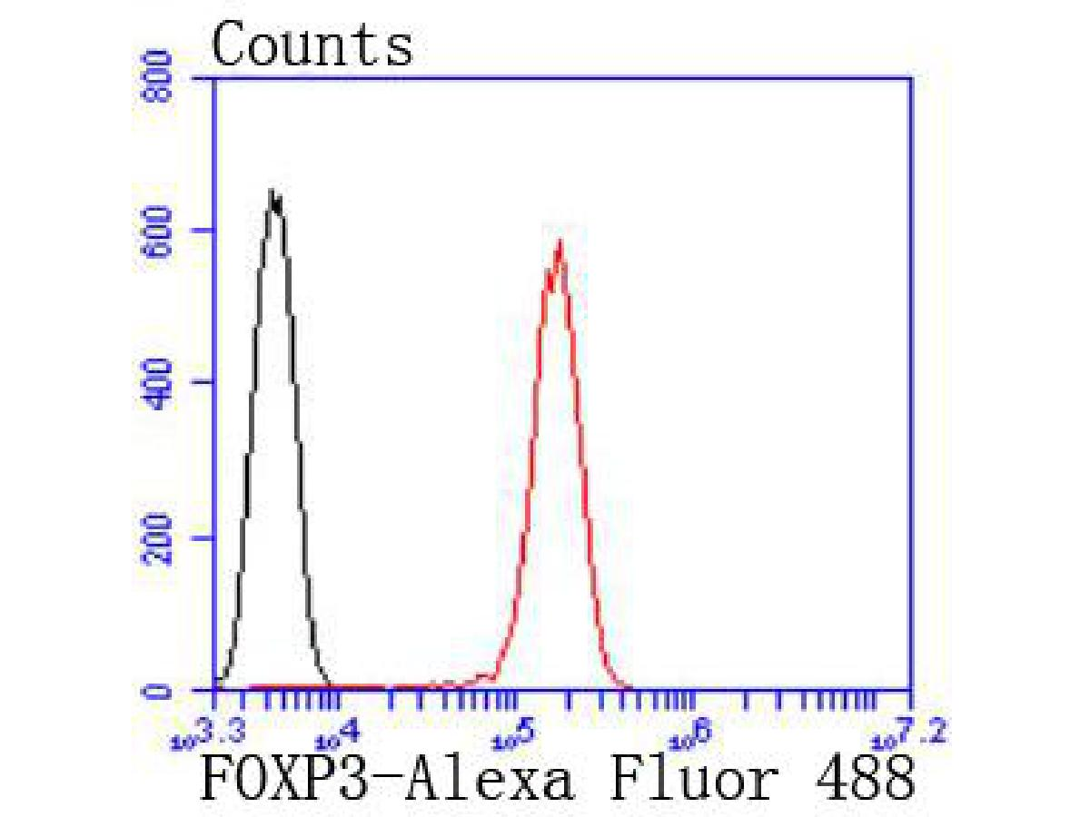 Flow cytometric analysis of FOXP3 was done on Jurkat cells. The cells were fixed, permeabilized and stained with the primary antibody (ET1702-12, 1/50) (red). After incubation of the primary antibody at room temperature for an hour, the cells were stained with a Alexa Fluor®488 conjugate-Goat anti-Rabbit IgG Secondary antibody at 1/1,000 dilution for 30 minutes.Unlabelled sample was used as a control (cells without incubation with primary antibody; black).