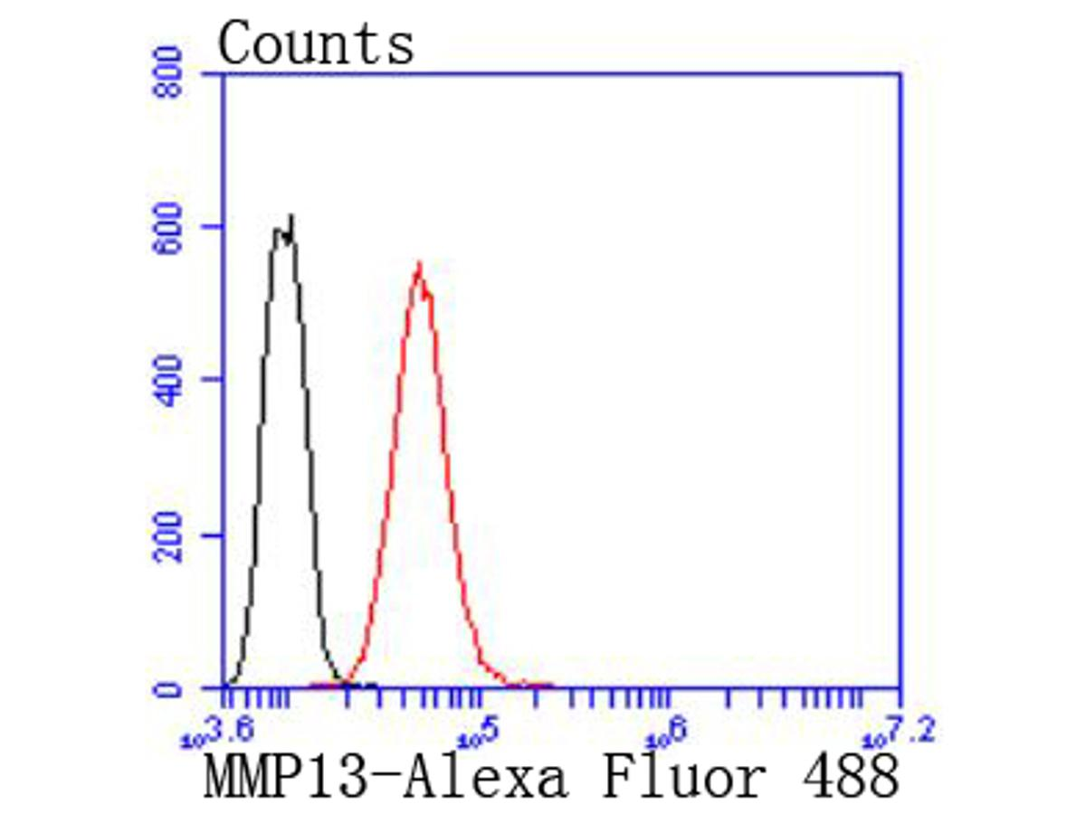 Flow cytometric analysis of MMP13 was done on Hela cells. The cells were fixed, permeabilized and stained with the primary antibody (ET1702-14, 1/50) (red). After incubation of the primary antibody at room temperature for an hour, the cells were stained with a Alexa Fluor 488-conjugated Goat anti-Rabbit IgG Secondary antibody at 1/1000 dilution for 30 minutes.Unlabelled sample was used as a control (cells without incubation with primary antibody; black).