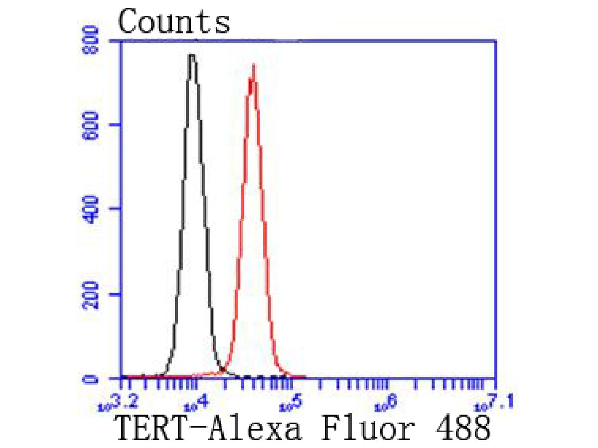 Flow cytometric analysis of Hela cells with TERT antibody at 1/50 dilution (red) compared with an unlabelled control (cells without incubation with primary antibody; black). Alexa Fluor 488-conjugated goat anti rabbit IgG was used as the secondary antibody