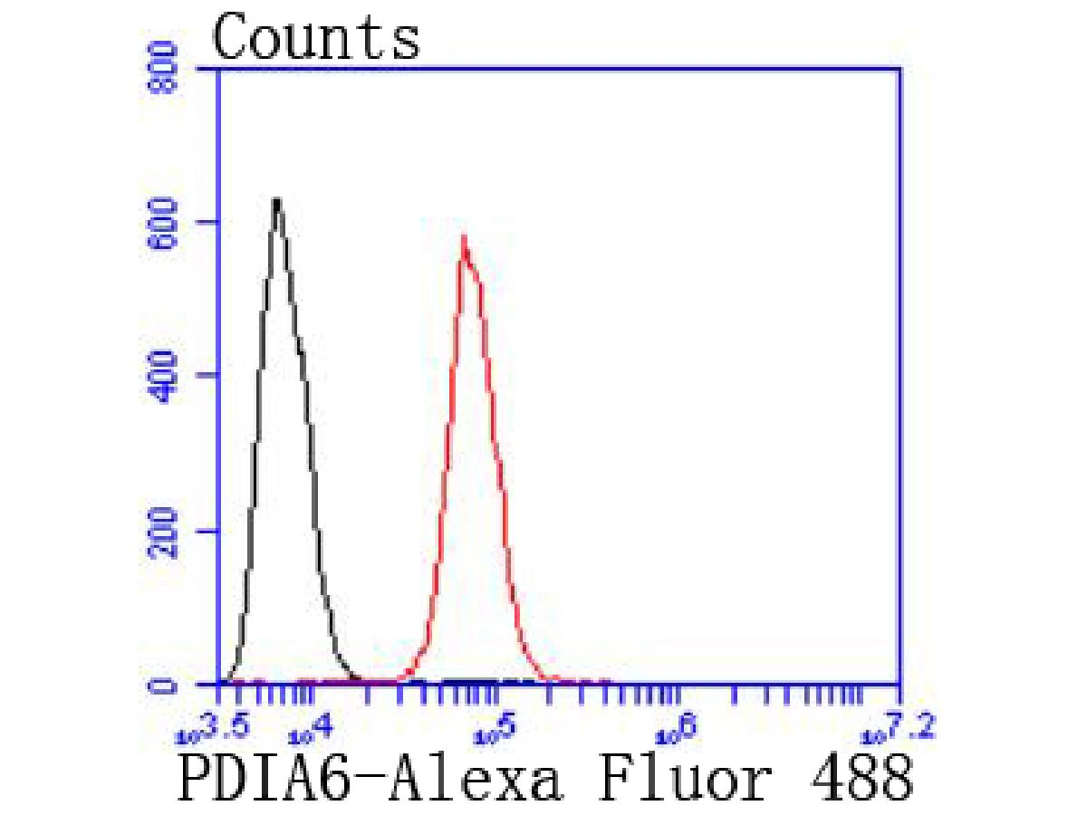 Flow cytometric analysis of Hela cells with PDIA6 antibody at 1/50 dilution (red) compared with an unlabelled control (cells without incubation with primary antibody; black). Alexa Fluor 488-conjugated goat anti rabbit IgG was used as the secondary antibody.