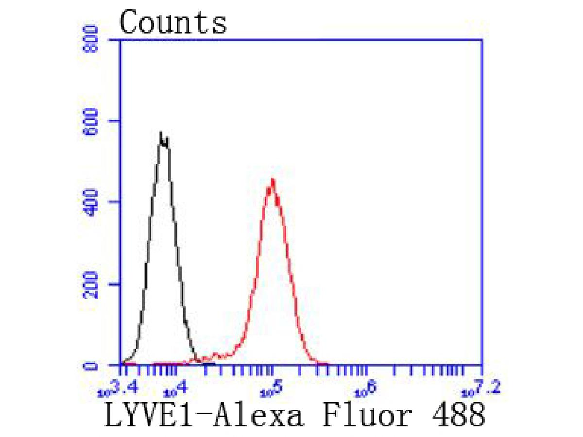 Flow cytometric analysis of LYVE1 was done on HUVEC cells. The cells were fixed, permeabilized and stained with the primary antibody (ET1702-29, 1/50) (red). After incubation of the primary antibody at room temperature for an hour, the cells were stained with a Alexa Fluor 488-conjugated Goat anti-Rabbit IgG Secondary antibody at 1/1000 dilution for 30 minutes.Unlabelled sample was used as a control (cells without incubation with primary antibody; black).
