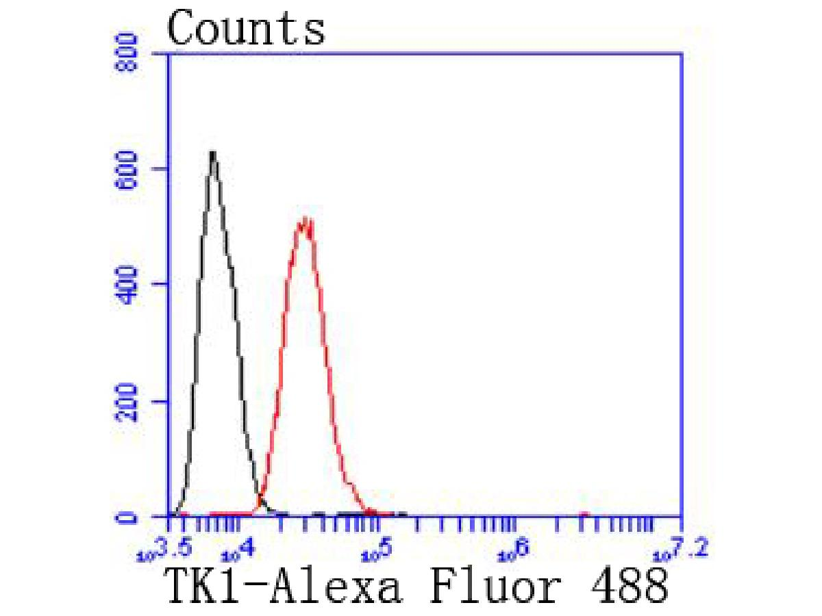 Flow cytometric analysis of Hela cells with Thymidine Kinase 1 antibody at 1/50 dilution (red) compared with an unlabelled control (cells without incubation with primary antibody; black). Alexa Fluor 488-conjugated goat anti rabbit IgG was used as the secondary antibody