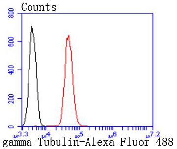 Flow cytometric analysis of gamma Tubulin was done on Jurkat cells. The cells were fixed, permeabilized and stained with the primary antibody (ET1702-32, 1/50) (red). After incubation of the primary antibody at room temperature for an hour, the cells were stained with a Alexa Fluor 488-conjugated Goat anti-Rabbit IgG Secondary antibody at 1/1000 dilution for 30 minutes.Unlabelled sample was used as a control (cells without incubation with primary antibody; black).