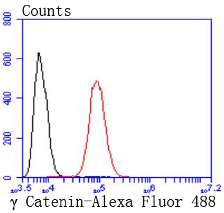Flow cytometric analysis of Hela cells with gamma Catenin antibody at 1/50 dilution (red) compared with an unlabelled control (cells without incubation with primary antibody; black). Alexa Fluor 488-conjugated goat anti rabbit IgG was used as the secondary antibody