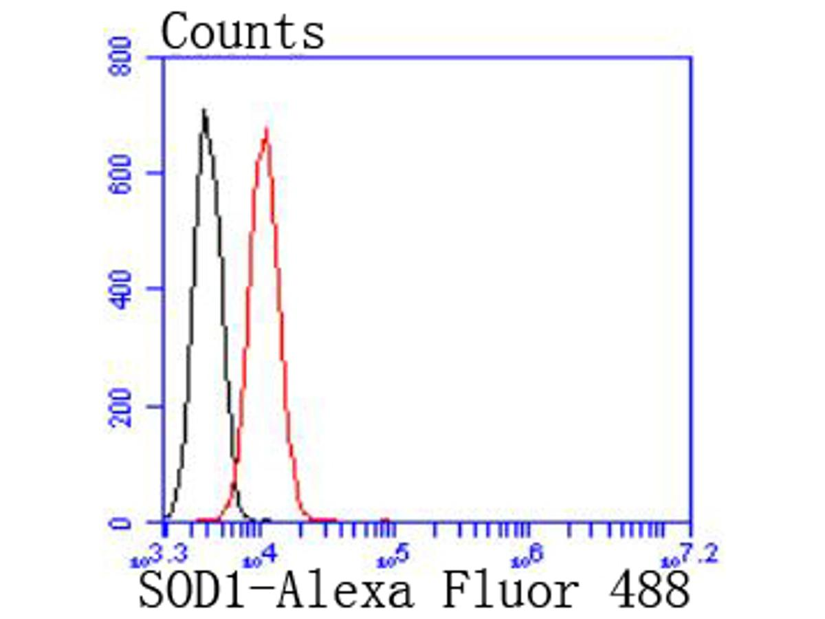 Flow cytometric analysis of Jurkat cells with SOD1 antibody at 1/50 dilution (red) compared with an unlabelled control (cells without incubation with primary antibody; black). Alexa Fluor 488-conjugated goat anti rabbit IgG was used as the secondary antibody.