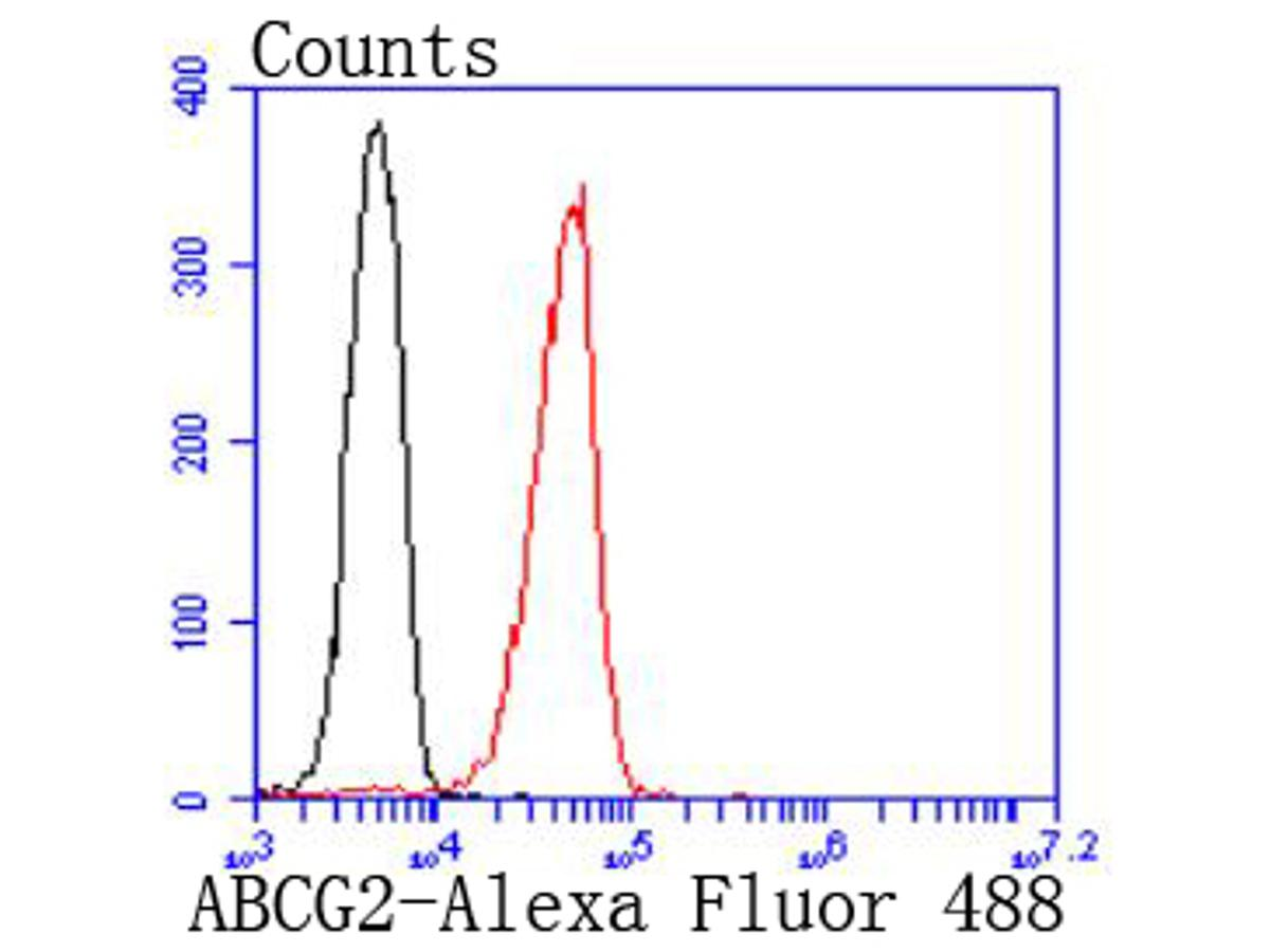 Flow cytometric analysis of 293T cells with ABCG2 antibody at 1/50 dilution (red) compared with an unlabelled control (cells without incubation with primary antibody; black). Alexa Fluor 488-conjugated goat anti rabbit IgG was used as the secondary antibody