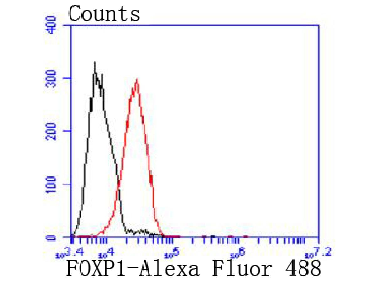 Flow cytometric analysis of MCF-7 cells with FOXP1 antibody at 1/50 dilution (red) compared with an unlabelled control (cells without incubation with primary antibody; black). Alexa Fluor 488-conjugated goat anti rabbit IgG was used as the secondary antibody