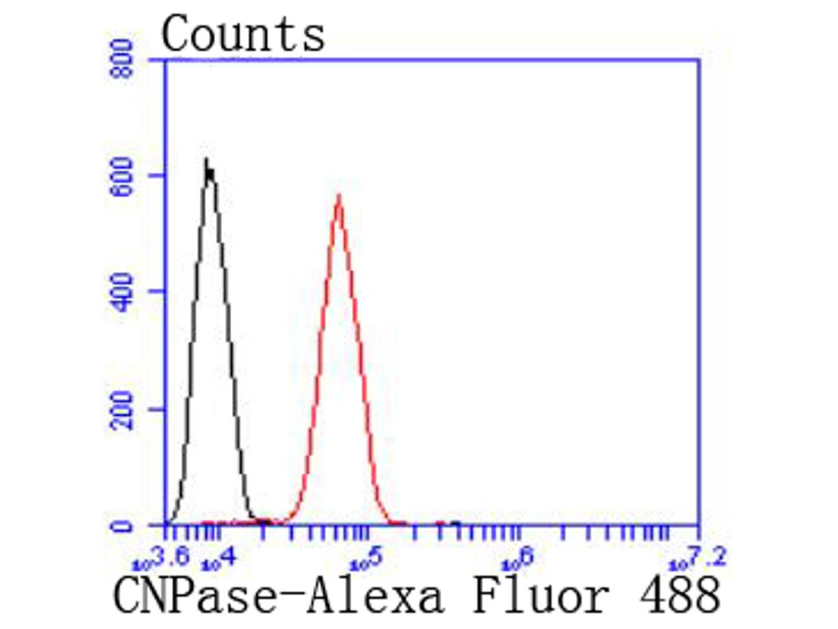 Flow cytometric analysis of CNPase was done on SH-SY5Y cells. The cells were fixed, permeabilized and stained with the primary antibody (ET1702-46, 1/50) (red). After incubation of the primary antibody at room temperature for an hour, the cells were stained with a Alexa Fluor 488-conjugated Goat anti-Rabbit IgG Secondary antibody at 1/1000 dilution for 30 minutes.Unlabelled sample was used as a control (cells without incubation with primary antibody; black).
