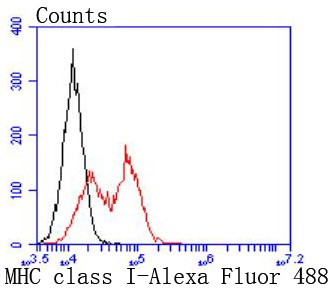 Flow cytometric analysis of MHC class I was done on THP-1 cells. The cells were fixed, permeabilized and stained with the primary antibody (ET1702-47, 1/50) (red). After incubation of the primary antibody at room temperature for an hour, the cells were stained with a Alexa Fluor 488-conjugated Goat anti-Rabbit IgG Secondary antibody at 1/1000 dilution for 30 minutes.Unlabelled sample was used as a control (cells without incubation with primary antibody; black).