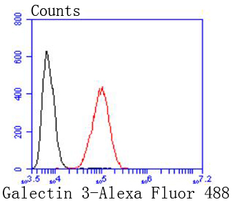 Flow cytometric analysis of Hela cells with Galectin 3 antibody at 1/50 dilution (red) compared with an unlabelled control (cells without incubation with primary antibody; black). Alexa Fluor 488-conjugated goat anti rabbit IgG was used as the secondary antibody