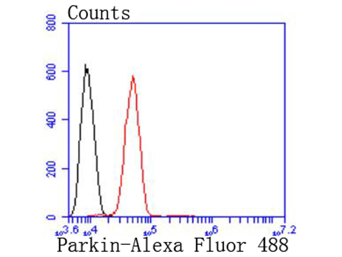Flow cytometric analysis of Parkin was done on SH-SY5Y cells. The cells were fixed, permeabilized and stained with the primary antibody (ET1702-60, 1/50) (red). After incubation of the primary antibody at room temperature for an hour, the cells were stained with a Alexa Fluor 488-conjugated Goat anti-Rabbit IgG Secondary antibody at 1/1000 dilution for 30 minutes.Unlabelled sample was used as a control (cells without incubation with primary antibody; black).