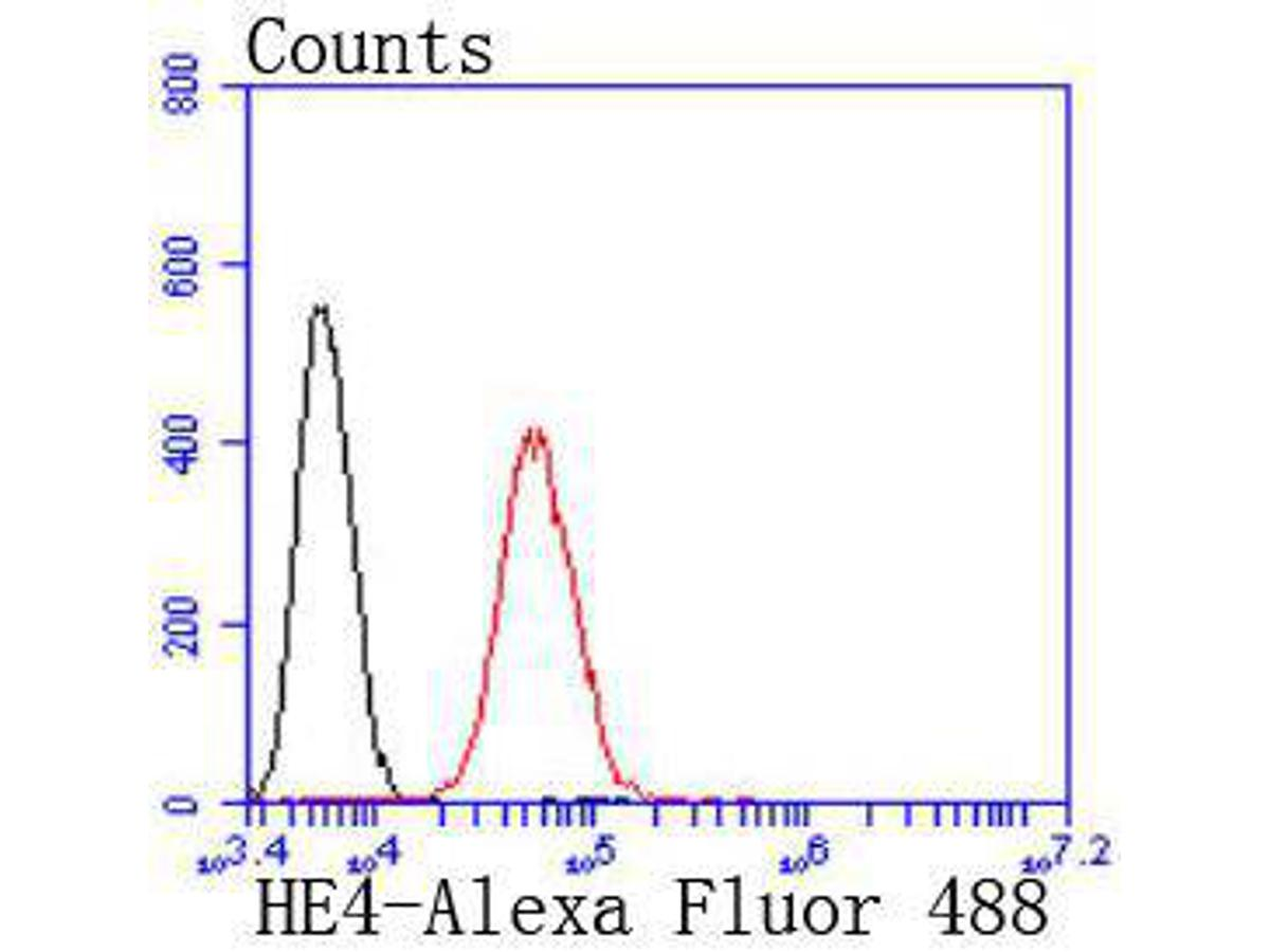 Flow cytometric analysis of HE4 was done on SW480 cells. The cells were fixed, permeabilized and stained with the primary antibody (ET1702-61, 1/50) (red). After incubation of the primary antibody at room temperature for an hour, the cells were stained with a Alexa Fluor 488-conjugated Goat anti-Rabbit IgG Secondary antibody at 1/1000 dilution for 30 minutes.Unlabelled sample was used as a control (cells without incubation with primary antibody; black).