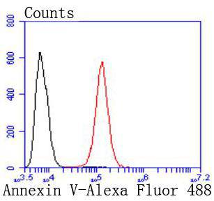 Flow cytometric analysis of Hela cells with Annexin V antibody at 1/50 dilution (red) compared with an unlabelled control (cells without incubation with primary antibody; black). Alexa Fluor 488-conjugated goat anti rabbit IgG was used as the secondary antibody