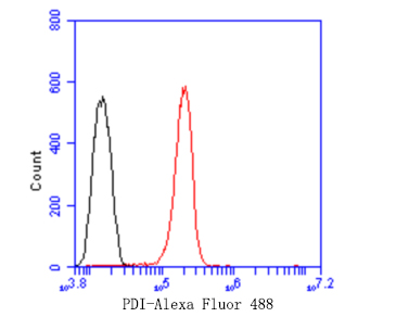 Flow cytometric analysis of Hela cells with PDI antibody at 1/50 dilution (red) compared with an unlabelled control (cells without incubation with primary antibody; black). Alexa Fluor 488-conjugated goat anti rabbit IgG was used as the secondary antibody