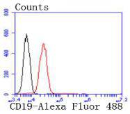 Flow cytometric analysis of CD19 was done on Jurkat cells. The cells were fixed, permeabilized and stained with the primary antibody (ET1702-74, 1/50) (red). After incubation of the primary antibody at room temperature for an hour, the cells were stained with a Alexa Fluor 488-conjugated Goat anti-Rabbit IgG Secondary antibody at 1/1000 dilution for 30 minutes.Unlabelled sample was used as a control (cells without incubation with primary antibody; black).