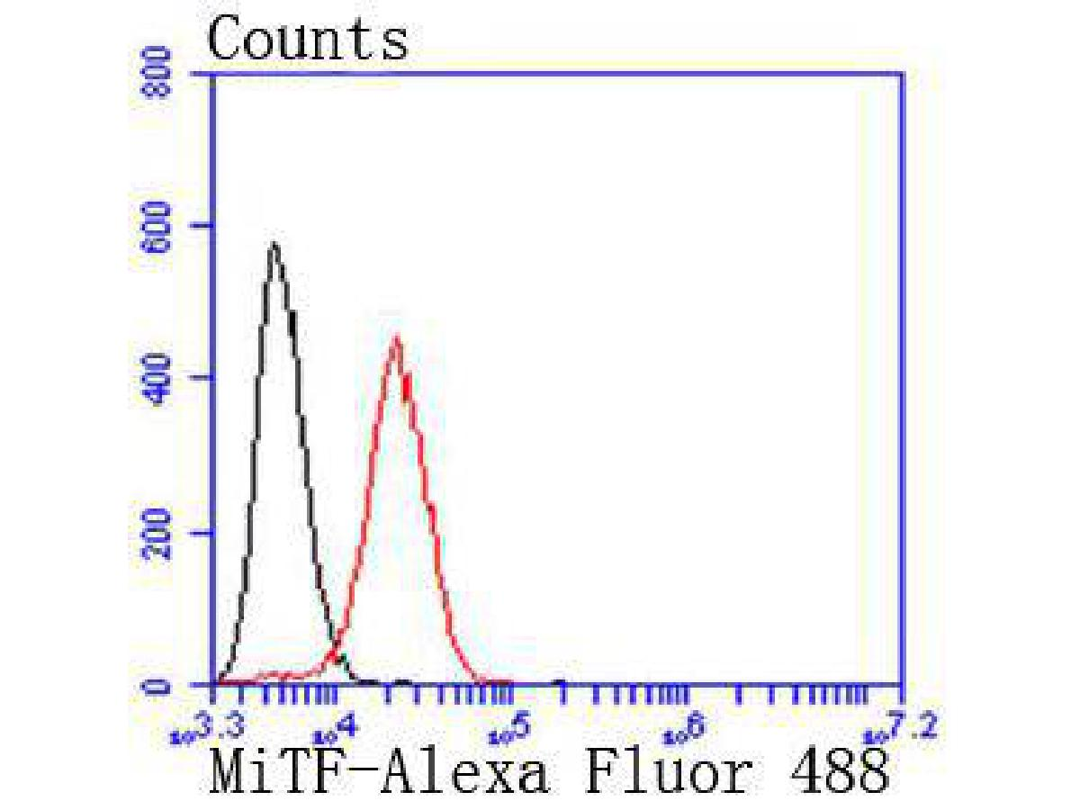 Flow cytometric analysis of SW480 cells with MiTF antibody at 1/50 dilution (red) compared with an unlabelled control (cells without incubation with primary antibody; black). Alexa Fluor 488-conjugated goat anti rabbit IgG was used as the secondary antibody.