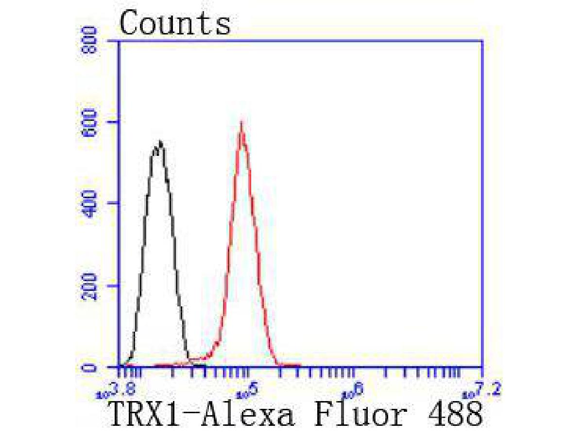 Flow cytometric analysis of Hela cells with TRX1 antibody at 1/50 dilution (red) compared with an unlabelled control (cells without incubation with primary antibody; black). Alexa Fluor 488-conjugated goat anti rabbit IgG was used as the secondary antibody.
