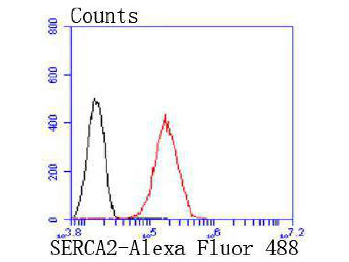 Flow cytometric analysis of Hela cells with SERCA2 antibody at 1/50 dilution (red) compared with an unlabelled control (cells without incubation with primary antibody; black). Alexa Fluor 488-conjugated goat anti rabbit IgG was used as the secondary antibody.