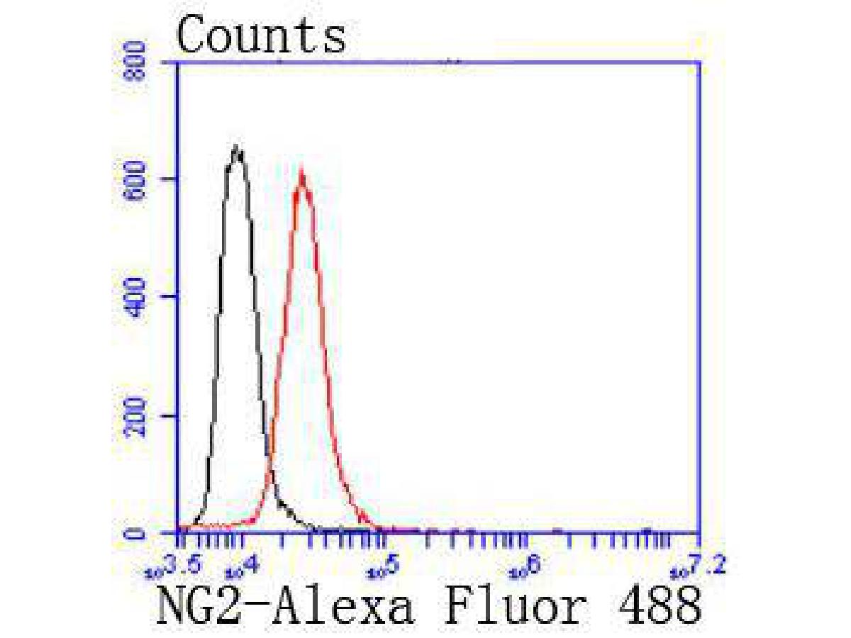 Flow cytometric analysis of NG2 was done on SHG-44 cells. The cells were fixed, permeabilized and stained with the primary antibody (ET1703-16, 1/50) (red). After incubation of the primary antibody at room temperature for an hour, the cells were stained with a Alexa Fluor 488-conjugated Goat anti-Rabbit IgG Secondary antibody at 1/1000 dilution for 30 minutes.Unlabelled sample was used as a control (cells without incubation with primary antibody; black).