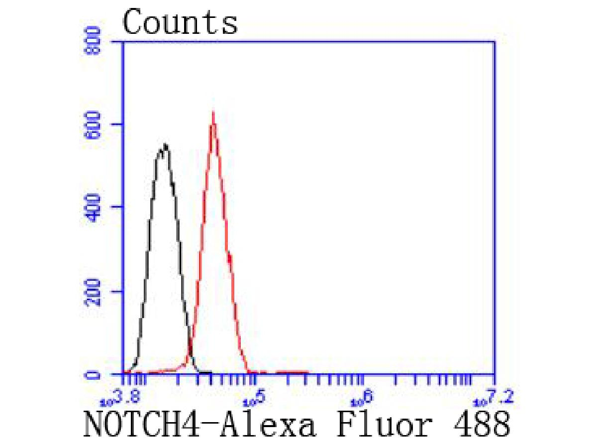 Flow cytometric analysis of Hela cells with NOTCH4 antibody at 1/50 dilution (red) compared with an unlabelled control (cells without incubation with primary antibody; black). Alexa Fluor 488-conjugated goat anti rabbit IgG was used as the secondary_x0018_ antibody.