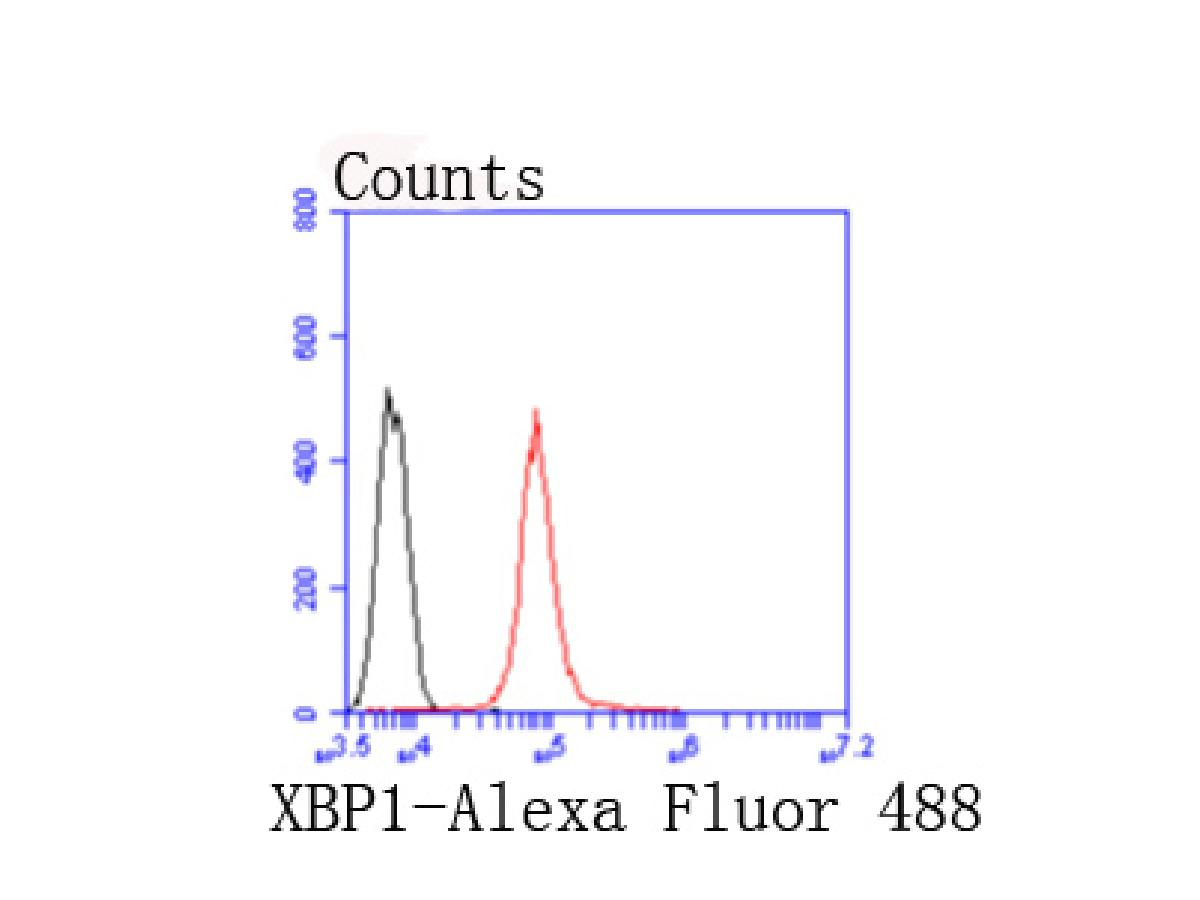 Flow cytometric analysis of 293T cells with XBP1 antibody at 1/50 dilution (red) compared with an unlabelled control (cells without incubation with primary antibody; black). Alexa Fluor 488-conjugated goat anti rabbit IgG was used as the secondary antibody.