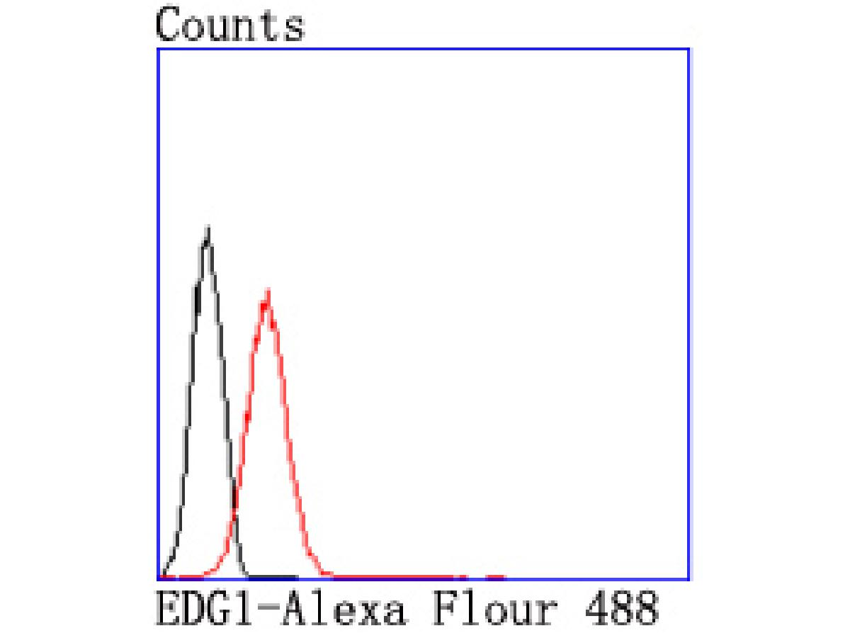 Flow cytometric analysis of Jurkat cells with EDG1 antibody at 1/50 dilution (red) compared with an unlabelled control (cells without incubation with primary antibody; black). Alexa Fluor 488-conjugated goat anti rabbit IgG was used as the secondary antibody.