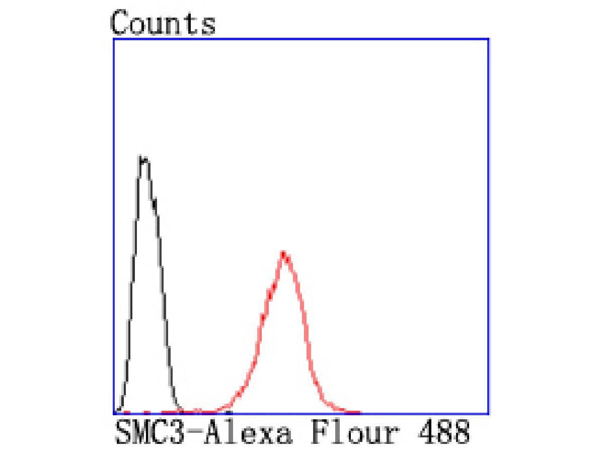 Flow cytometric analysis of Hela cells with SMC3 antibody at 1/50 dilution (red) compared with an unlabelled control (cells without incubation with primary antibody; black). Alexa Fluor 488-conjugated goat anti rabbit IgG was used as the secondary antibody.