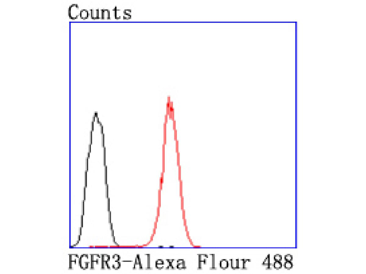 Flow cytometric analysis of FGFR3 was done on HepG2 cells. The cells were fixed, permeabilized and stained with the primary antibody (ET1703-36, 1/50) (red). After incubation of the primary antibody at room temperature for an hour, the cells were stained with a Alexa Fluor 488-conjugated Goat anti-Rabbit IgG Secondary antibody at 1/1000 dilution for 30 minutes.Unlabelled sample was used as a control (cells without incubation with primary antibody; black).