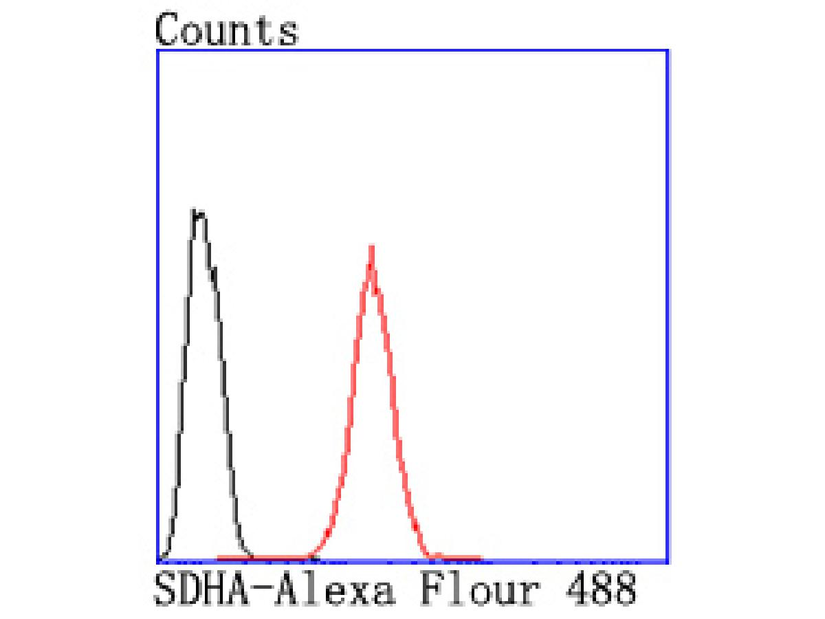 Flow cytometric analysis of Hela cells with SDHA antibody at 1/50 dilution (red) compared with an unlabelled control (cells without incubation with primary antibody; black). Alexa Fluor 488-conjugated goat anti rabbit IgG was used as the secondary antibody.