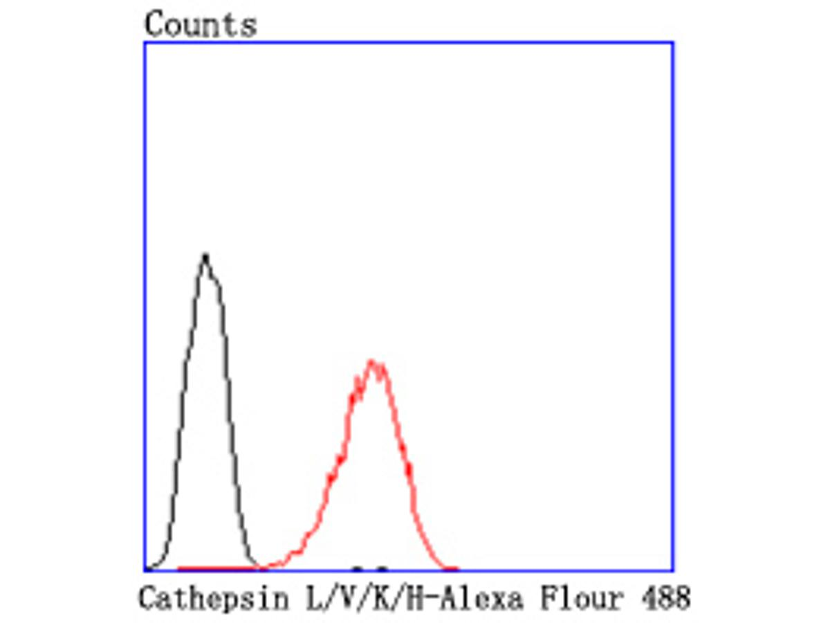Flow cytometric analysis of Cathepsin L/V/K/H was done on HepG2 cells. The cells were fixed, permeabilized and stained with the primary antibody (ET1703-44, 1/50) (red). After incubation of the primary antibody at room temperature for an hour, the cells were stained with a Alexa Fluor 488-conjugated Goat anti-Rabbit IgG Secondary antibody at 1/1000 dilution for 30 minutes.Unlabelled sample was used as a control (cells without incubation with primary antibody; black).