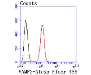 Flow cytometric analysis of SH-SY5Y cells with VAMP2 antibody at 1/50 dilution (red) compared with an unlabelled control (cells without incubation with primary antibody; black). Alexa Fluor 488-conjugated goat anti rabbit IgG was used as the secondary antibody.