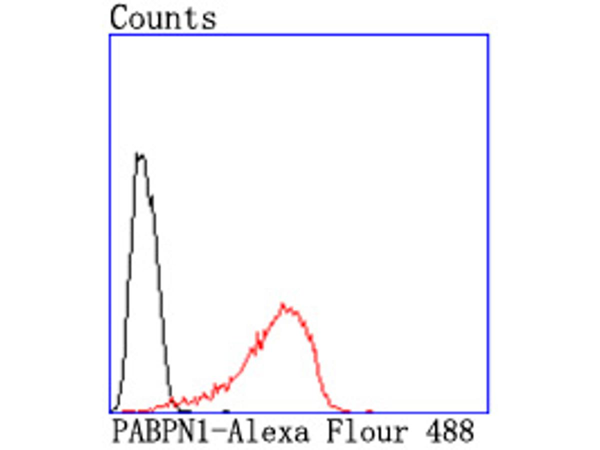 Flow cytometric analysis of PABPN1 was done on Hela cells. The cells were fixed, permeabilized and stained with the primary antibody (ET1703-66, 1/50) (red). After incubation of the primary antibody at room temperature for an hour, the cells were stained with a Alexa Fluor 488-conjugated Goat anti-Rabbit IgG Secondary antibody at 1/1000 dilution for 30 minutes.Unlabelled sample was used as a control (cells without incubation with primary antibody; black).