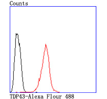 Flow cytometric analysis of TDP43 was done on Hela cells. The cells were fixed, permeabilized and stained with the primary antibody (ET1703-74, 1/50) (red). After incubation of the primary antibody at room temperature for an hour, the cells were stained with a Alexa Fluor 488-conjugated Goat anti-Rabbit IgG Secondary antibody at 1/1000 dilution for 30 minutes.Unlabelled sample was used as a control (cells without incubation with primary antibody; black).
