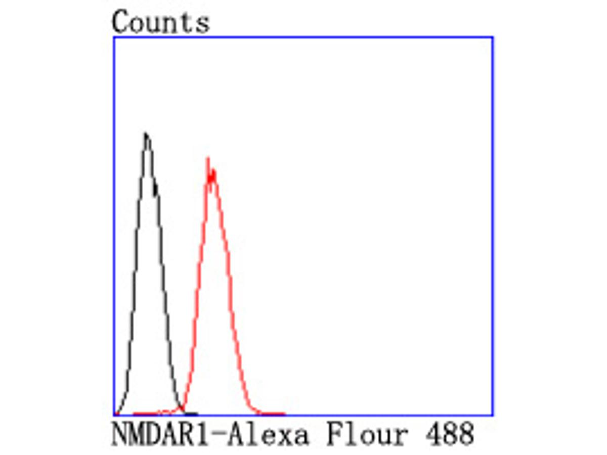 Flow cytometric analysis of NMDAR1 was done on SH-SY5Y cells. The cells were fixed, permeabilized and stained with the primary antibody (ET1703-75, 1/50) (red). After incubation of the primary antibody at room temperature for an hour, the cells were stained with a Alexa Fluor 488-conjugated Goat anti-Rabbit IgG Secondary antibody at 1/1000 dilution for 30 minutes.Unlabelled sample was used as a control (cells without incubation with primary antibody; black).