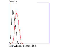 Flow cytometric analysis of MCF-7 cells with TTR antibody at 1/50 dilution (red) compared with an unlabelled control (cells without incubation with primary antibody; black). Alexa Fluor 488-conjugated goat anti rabbit IgG was used as the secondary antibody.