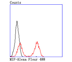 Flow cytometric analysis of THP-1 cells with MIF antibody at 1/50 dilution (red) compared with an unlabelled control (cells without incubation with primary antibody; black). Alexa Fluor 488-conjugated goat anti rabbit IgG was used as the secondary antibody.