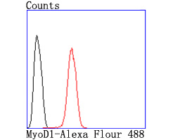 Flow cytometric analysis of Hela cells with MyoD1 antibody at 1/50 dilution (red) compared with an unlabelled control (cells without incubation with primary antibody; black). Alexa Fluor 488-conjugated goat anti rabbit IgG was used as the secondary antibody.