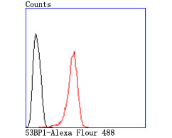 Flow cytometric analysis of Hela cells with 53BP1 antibody at 1/50 dilution (red) compared with an unlabelled control (cells without incubation with primary antibody; black). Alexa Fluor 488-conjugated goat anti rabbit IgG was used as the secondary antibody.
