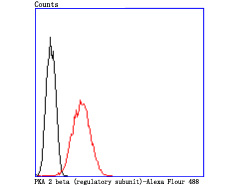 Flow cytometric analysis of N2A cells with PKA 2 beta (regulatory subunit) antibody at 1/50 dilution (red) compared with an unlabelled control (cells without incubation with primary antibody; black). Alexa Fluor 488-conjugated goat anti rabbit IgG was used as the secondary antibody.