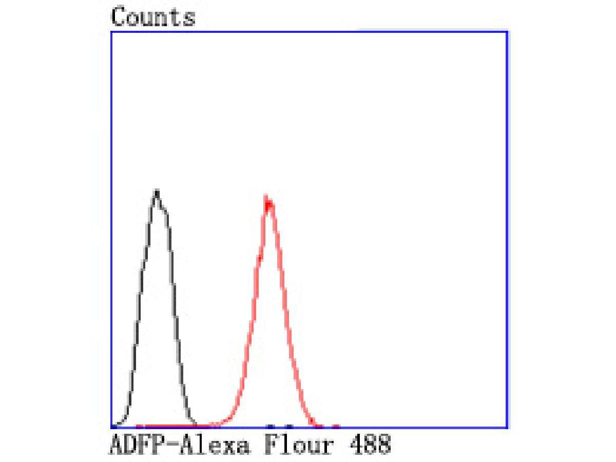 Flow cytometric analysis of Hela cells with ADFP antibody at 1/50 dilution (red) compared with an unlabelled control (cells without incubation with primary antibody; black). Alexa Fluor 488-conjugated goat anti rabbit IgG was used as the secondary antibody.