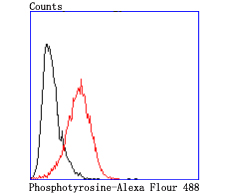 Flow cytometric analysis of A431 cells with Phosphotyrosine antibody at 1/50 dilution (red) compared with an unlabelled control (cells without incubation with primary antibody; black). Alexa Fluor 488-conjugated goat anti rabbit IgG was used as the secondary antibody.