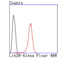 Flow cytometric analysis of Hela cells with Lin-28 antibody at 1/50 dilution (red) compared with an unlabelled control (cells without incubation with primary antibody; black). Alexa Fluor 488-conjugated goat anti rabbit IgG was used as the secondary antibody.