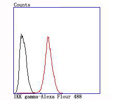 Flow cytometric analysis of IKK gamma was done on Hela cells. The cells were fixed, permeabilized and stained with the primary antibody (ET1704-40, 1/50) (red). After incubation of the primary antibody at room temperature for an hour, the cells were stained with a Alexa Fluor 488-conjugated Goat anti-Rabbit IgG Secondary antibody at 1/1000 dilution for 30 minutes.Unlabelled sample was used as a control (cells without incubation with primary antibody; black).