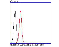 Flow cytometric analysis of Annexin A2 was done on K562 cells. The cells were fixed, permeabilized and stained with the primary antibody (ET1704-49, 1/50) (red). After incubation of the primary antibody at room temperature for an hour, the cells were stained with a Alexa Fluor 488-conjugated Goat anti-Rabbit IgG Secondary antibody at 1/1000 dilution for 30 minutes.Unlabelled sample was used as a control (cells without incubation with primary antibody; black).
