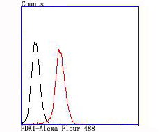 Flow cytometric analysis of PDK1 was done on NIH/3T3 cells. The cells were fixed, permeabilized and stained with the primary antibody (ET1704-66, 1/50) (red). After incubation of the primary antibody at room temperature for an hour, the cells were stained with a Alexa Fluor 488-conjugated Goat anti-Rabbit IgG Secondary antibody at 1/1000 dilution for 30 minutes.Unlabelled sample was used as a control (cells without incubation with primary antibody; black).