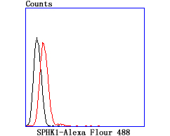 Flow cytometric analysis of Raji cells with SPHK1 antibody at 1/100 dilution (red) compared with an unlabelled control (cells without incubation with primary antibody; black).