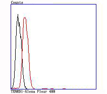 Flow cytometric analysis of SH-SY5Y cells with TXNRD1 antibody at 1/100 dilution (red) compared with an unlabelled control (cells without incubation with primary antibody; black).
