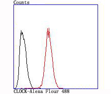 Flow cytometric analysis of Hela cells with CLOCK antibody at 1/100 dilution (red) compared with an unlabelled control (cells without incubation with primary antibody; black).