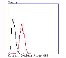 Flow cytometric analysis of Hela cells with Calpain 2 antibody at 1/100 dilution (red) compared with an unlabelled control (cells without incubation with primary antibody; black).