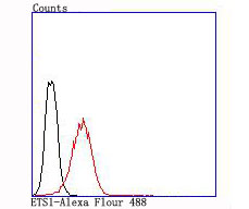Flow cytometric analysis of Jurkat cells with ETS1 antibody at 1/100 dilution (red) compared with an unlabelled control (cells without incubation with primary antibody; black).